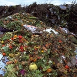 Food-Waste-in-Landfill